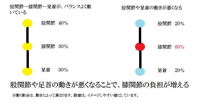 関節の動く割合
